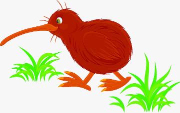 O kiwi, uma ave que é símbolo da Nova Zelândia, encontra-se em ameaça de extinção
