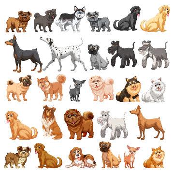 Apesar de diferentes, todos os cachorros são da mesma espécie