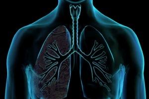O pulmão é uma importante estrutura do sistema respiratório.