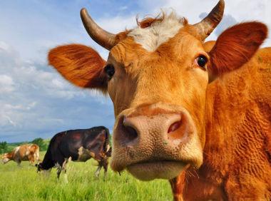 Você sabe diferenciar a agropecuária extensiva da intensiva?