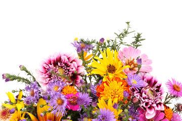 As flores são coloridas graças à presença de pigmentos vegetais