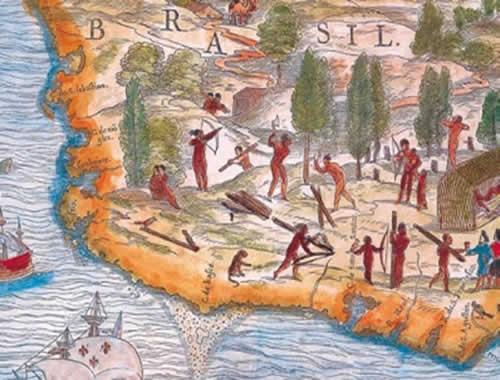 A extração do pau-brasil: a mais importante atividade econômica dos primeiros anos da colonização