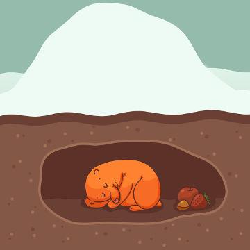 A hibernação ajuda o animal a enfrentar o inverno