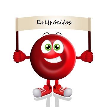 Os eritrócitos apresentam coloração vermelha graças à presença de hemoglobina