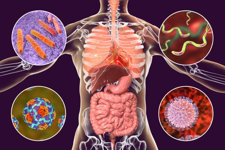 Vários micro-organismos causam doenças nos seres humanos.
