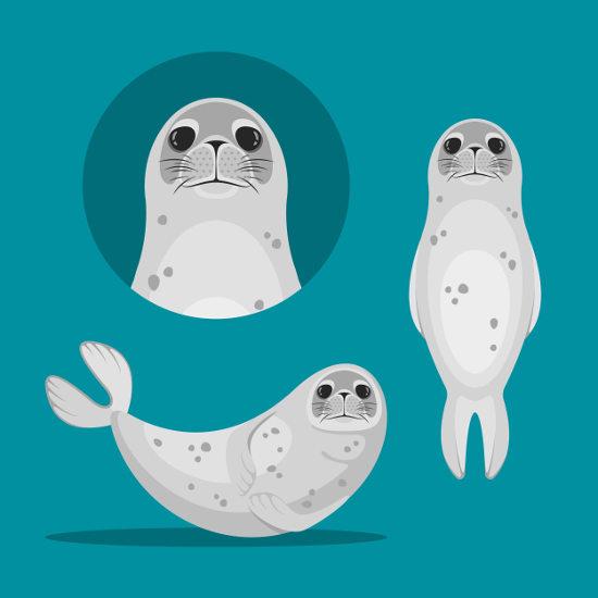 As focas são animais do grupo dos pinípedes.