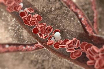 O sangue é formado por plasma, eritrócitos, leucócitos e plaquetas