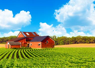 Um exemplo de grande propriedade rural, chamada de latifúndio