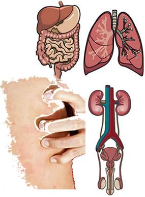 Nossa pele e nossos órgãos internos são constituídos por tecido epitelial