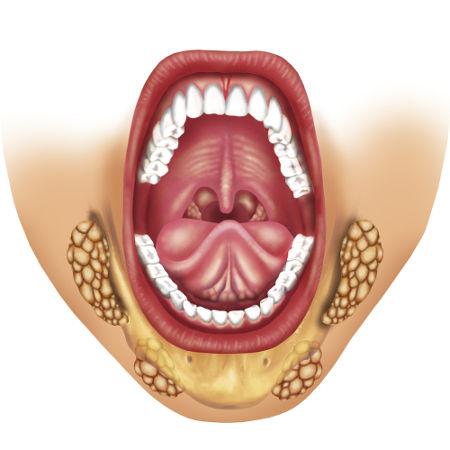As glândulas salivares são responsáveis por produzir saliva