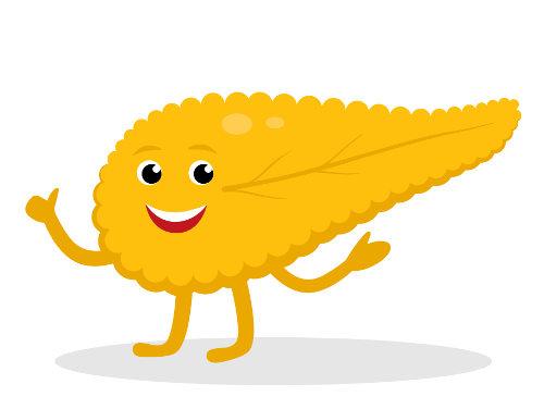 O pâncreas é um órgão que garante a produção do suco pancreático e de hormônios, sendo fundamental para o organismo.