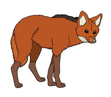 O lobo-guará é uma espécie que se encontra atualmente ameaçada de extinção