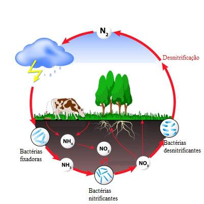 Observe as etapas do ciclo do nitrogênio
