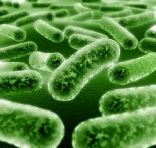 As bactérias são seres unicelulares e procariontes