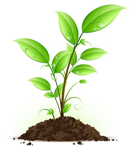 As plantas possuem coloração verde por causa da presença de clorofila