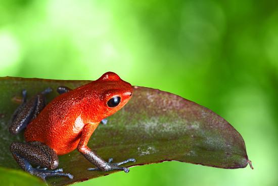 Anfíbios vivem geralmente em ambientes úmidos, próximos à lagos e represas