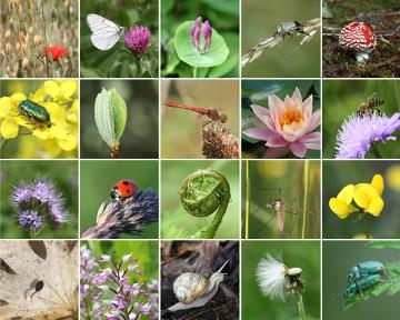 A biodiversidade refere-se à variedade de espécies no planeta