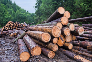 A madeira é uma matéria-prima utilizada para a produção de vários tipos de mercadorias