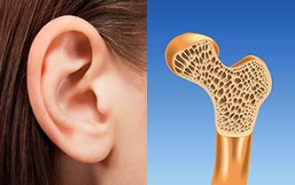 Tecido cartilaginoso e tecido ósseo são tipos de tecido conjuntivo