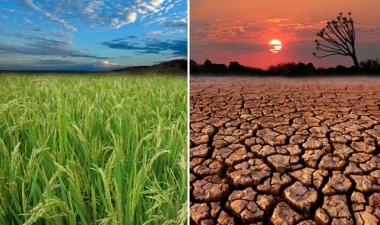 Desertificação: O que antes era verde, passou a ser deserto