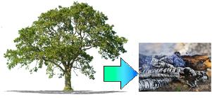A madeira da árvore passou por uma transformação química
