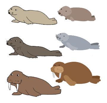 Os pinípedes incluem mamíferos pertencentes a três famílias de animais