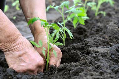 A agricultura orgânica utiliza trabalho manual e sem agrotóxicos