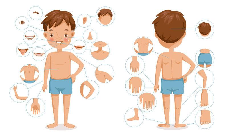 O corpo humano é uma máquina complexa com várias estruturas que trabalham em conjunto.