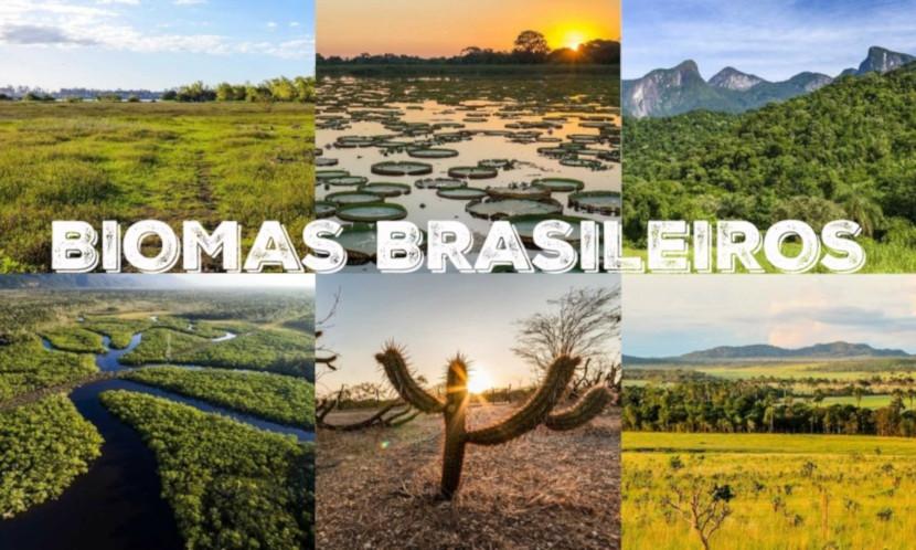 Segundo o IBGE, o Brasil possui seis biomas, os quais apresentam características distintas entre si, como a vegetação, clima e hidrografia.