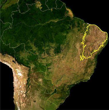 A Caatinga está quase toda localizada na região Nordeste do país