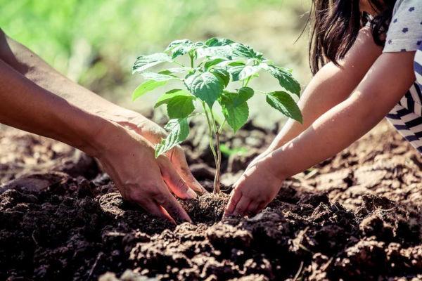 Ação antrópica positiva no meio ambiente.