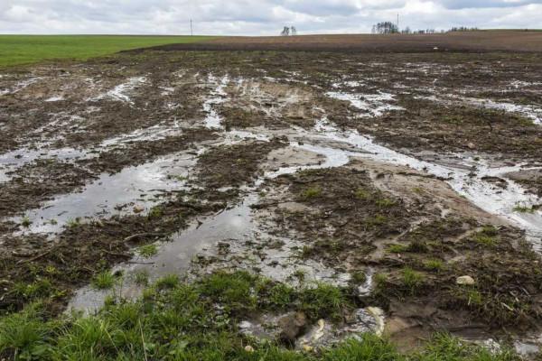 O afloramento dos lençóis freáticos dá origem a nascentes de rios.