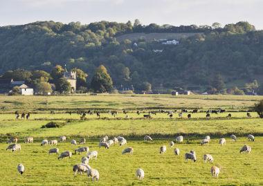 Exemplo de criação de gado em agropecuária extensiva