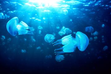 Acidentes com águas-vivas podem desencadear diversas reações desagradáveis