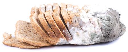 Pão deteriorado por fungos