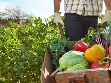 A agricultura orgânica prioriza a variedade na produção de alimentos