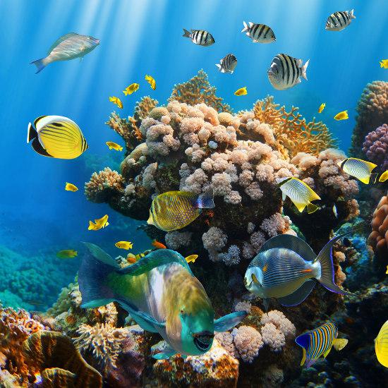 O aquecimento global coloca em risco todo o ecossistema recifal.