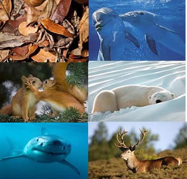 Alguns animais se beneficiam da cor do ambiente para se camuflar