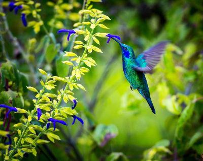 As aves procuram flores com cores vivas e néctar