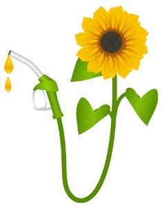 Você sabia que o biodiesel pode ser produzido a partir do girassol?