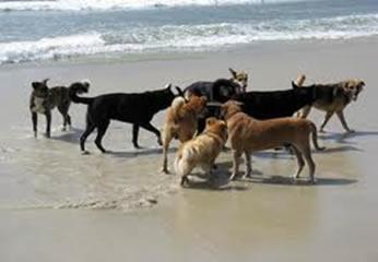 O bicho-geográfico parasita o intestino de cães e gatos