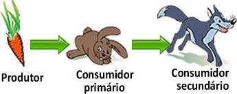 Nesse exemplo de cadeia alimentar o consumidor secundário é o lobo