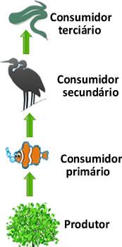 Nessa cadeia alimentar temos a cobra como consumidor terciário
