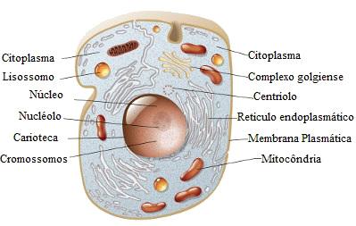 As células animais apresentam como organelas exclusivas os lisossomos e os centríolos