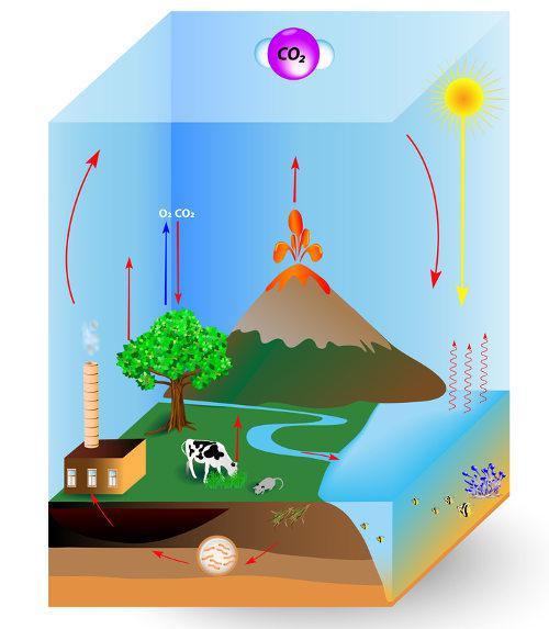 Alguns processos liberam gás carbônico no ambiente, tais como a combustão e a respiração.