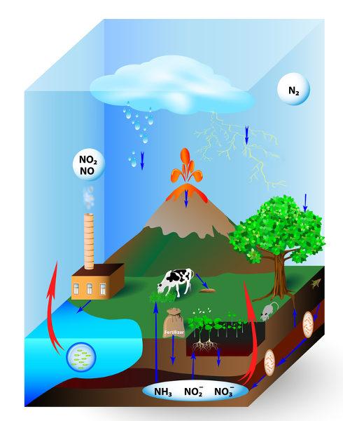 O ciclo do nitrogênio está relacionado com a ação de bactérias.