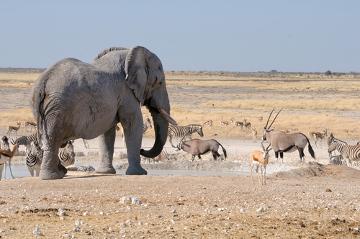 Diversos animais de espécies diferentes competem pelo mesmo recurso: a água