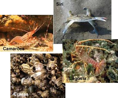 A maioria dos crustáceos vive em ambientes marinhos