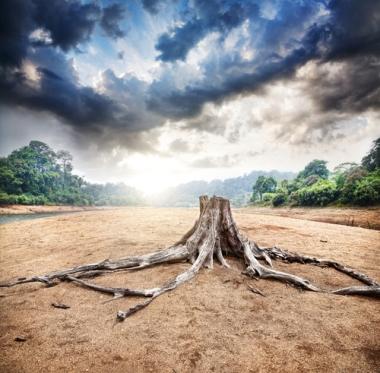 O desmatamento é uma das principais causas da desertificação