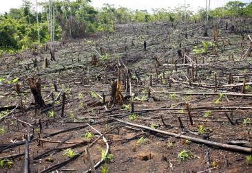 A devastação da Floresta Amazônica vem avançando sem trégua